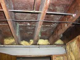 mold picture in crawlspace