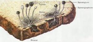 mold illustration
