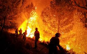FOREST FIRE PIC